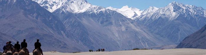 Camel ride in Leh Ladakh Packages